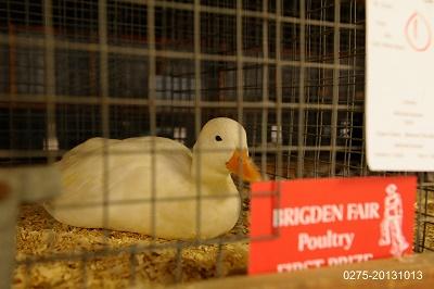Ducks & Geese Show