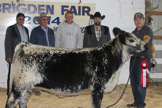 Province's first-ever Speckle Park Cattle Show held at Brigden Fair 2014