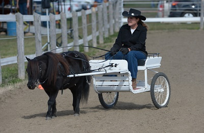 Miniature Horse Show (Cancelled Due to Weather)